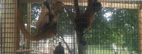 The Texas Zoo is one of Zoos of Texas.