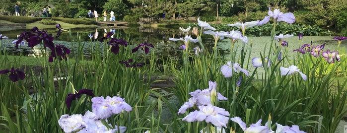 Ninomaru Garden is one of 西郷どんゆかりのスポット.