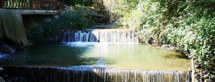 The Garden is one of Maşukiye.
