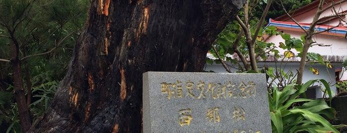 西郷松 is one of 西郷どんゆかりのスポット.