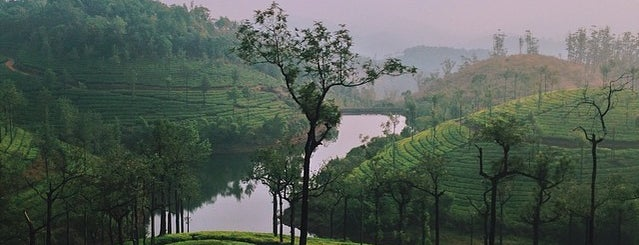 Semni Valley Tea Estate is one of Incredible India.