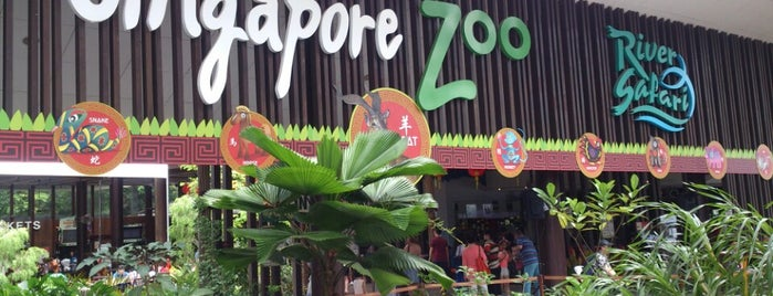 Singapore Zoo is one of Singapore Things To Do!!.