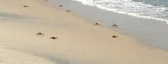 Turtle Beach is one of สถานที่ที่ Den ถูกใจ.