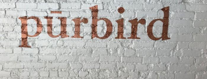pūrbird is one of New Neighborhood.
