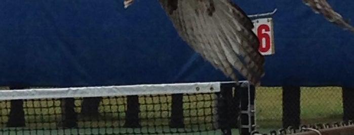 Mercer County Park Tennis Complex is one of Locais curtidos por Jamieb.