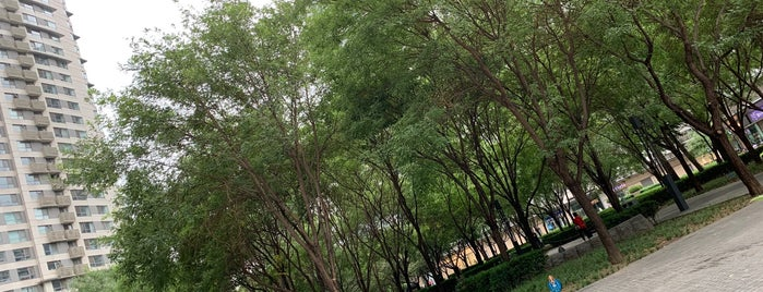 Central Park is one of China -Beijing.
