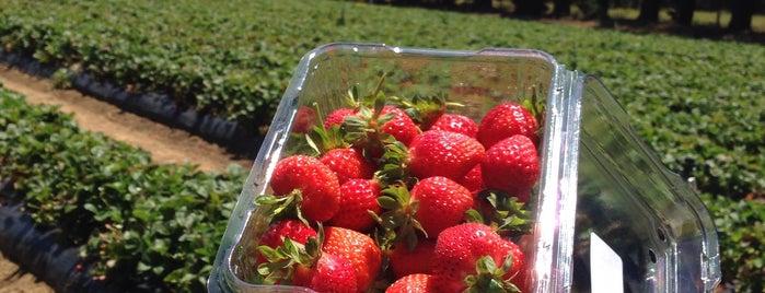 Sunny Ridge Strawberry Farm is one of Visit Victoria.