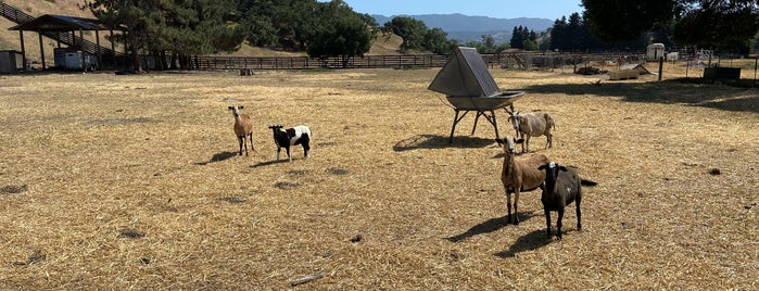 Buttonwood Farm and Winery & Vineyard is one of Santa Barbara Wineries.