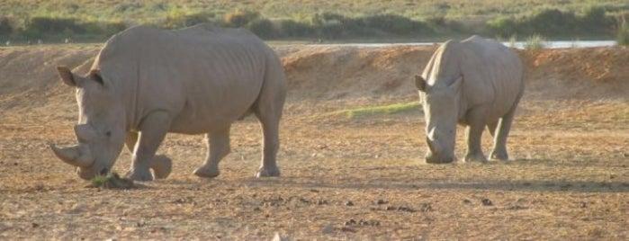 Kruger National Park is one of Tsamina mina waka waka eh eh.