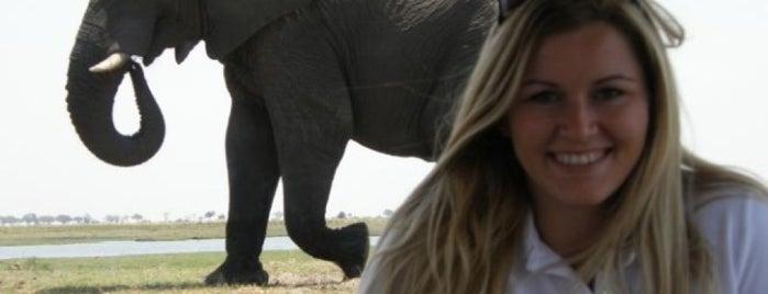 Addo Elephant National Park is one of Tsamina mina waka waka eh eh.