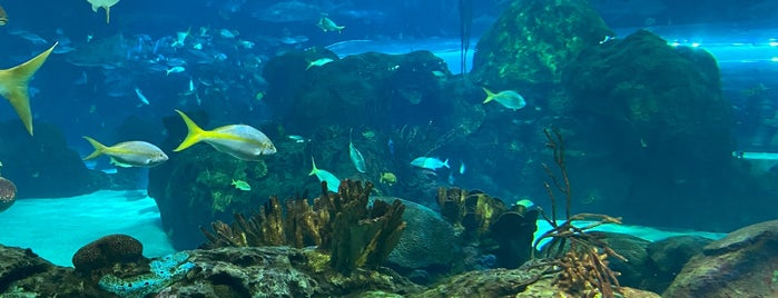 Ripley's Aquarium of Canada is one of Christoph's Liked Places.
