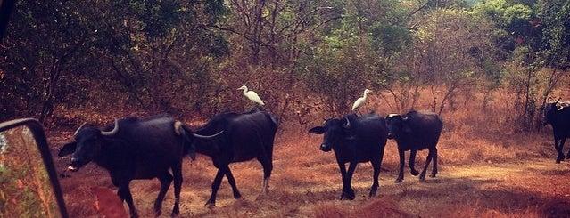 Bhagwaan Mahaveer Wildlife Sanctuary is one of Goa.