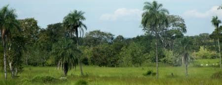Novo São Joaquim is one of Mato Grosso.