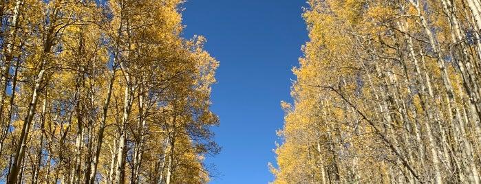 Aspen Vista Trail is one of Aleksey'in Kaydettiği Mekanlar.