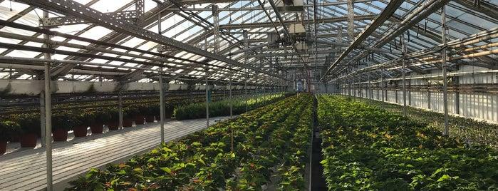 Romence Gardens & Greenhouses is one of Lydia : понравившиеся места.