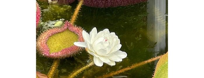 Vijver (De Hortus Botanicus) is one of amsterdam.
