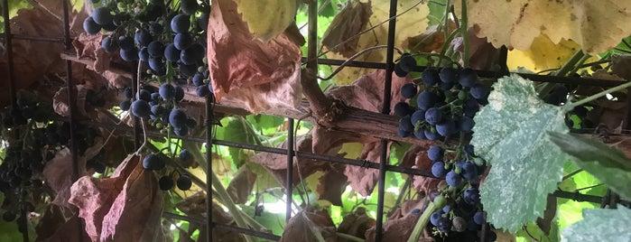 Villa Creek Winery is one of Ebi : понравившиеся места.