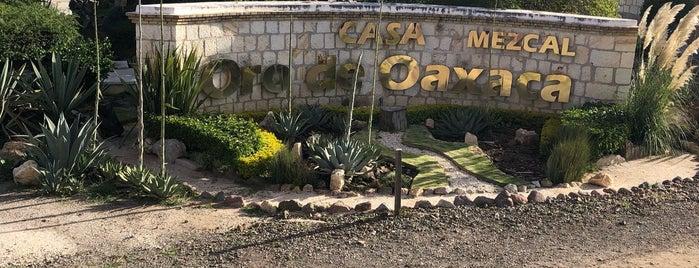 Casa del Mezcal del Oro de Oaxaca is one of Oaxaca.