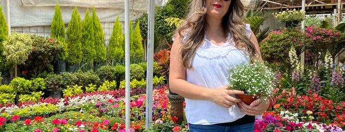 Mercado de Plantas y Flores Cuemanco is one of Lieux qui ont plu à Diana.