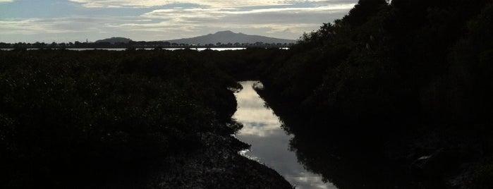 Shore Road Reserve is one of Lugares favoritos de Ben.