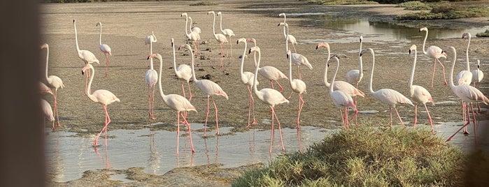 Flamingo Lagoon is one of Summer 2021 Goals 👙💕.