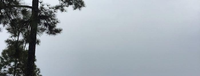 ผาเหยียบเมฆ is one of ขอนแก่น, ชัยภูมิ, หนองบัวลำภู, เลย.