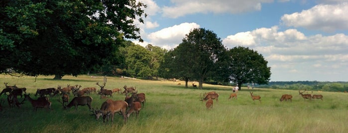 Richmond Park is one of To Do with Kids in London.