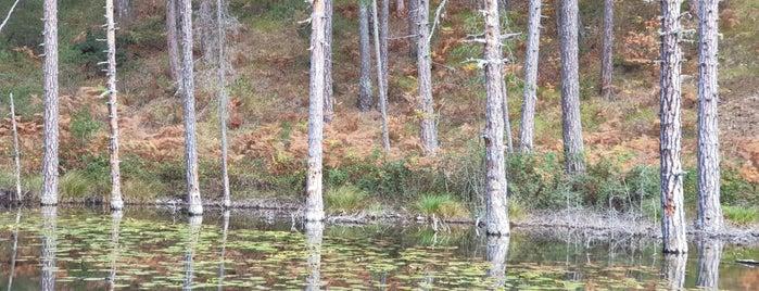 Λίμνη με τα νούφαρα is one of Posti salvati di Thanos.