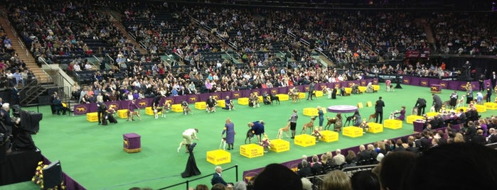 135th Annual Westminster Kennel Club is one of Tempat yang Disukai Kim.