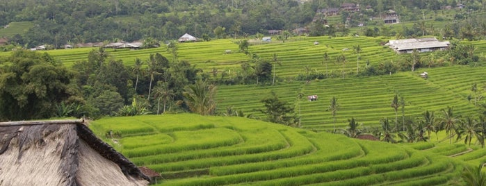 Jatiluwih Rice Terraces is one of DENPASAR - BALI.