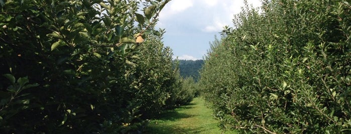 Skytop Apple Orchard is one of Excellent Farms for Apple Picking.