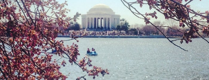 National Cherry Blossom Festival 2013 is one of DC Festivals.