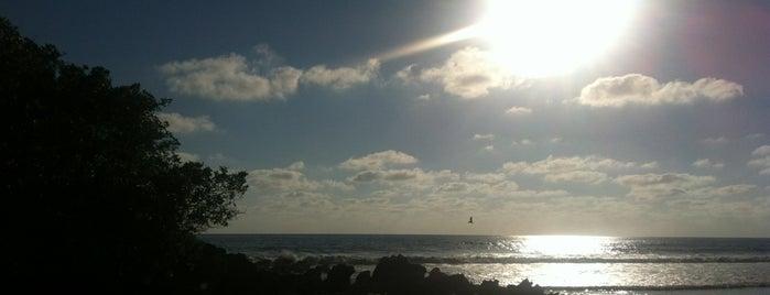 Playa Troncones is one of Tempat yang Disukai Carrie.