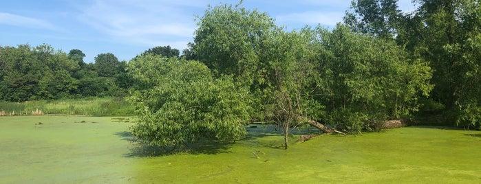 Lincoln Marsh Natural Area is one of Dan'ın Beğendiği Mekanlar.