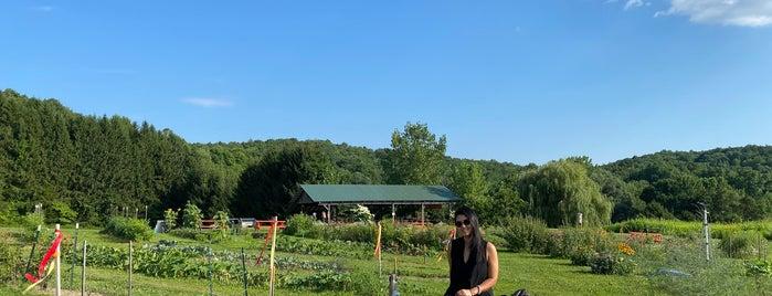 Katchkie Farm is one of New England 2021.