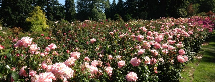 International Rose Test Garden is one of PDXcellent.