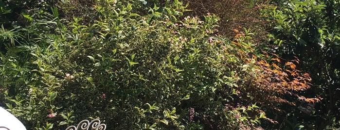 Ela bahçe is one of Ckr'ın Kaydettiği Mekanlar.