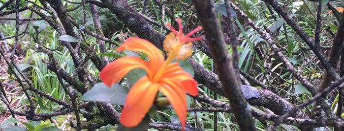 Limahuli Garden And Preserve is one of Kauai, Hawaii.