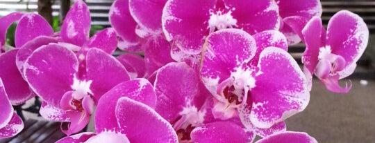 Taman Orkid (Orchid Garden) is one of Kuala Lumpur.