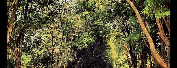 Parque da Luz is one of Sampa 460 :).