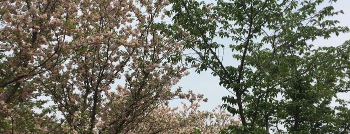 Gucun Park is one of สถานที่ที่ Christine ถูกใจ.