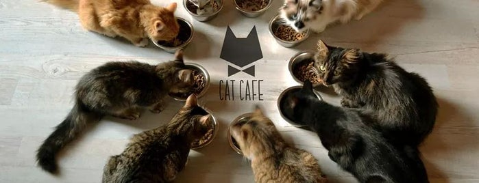 Cat Cafe / Kačių Kavinė is one of Lieux qui ont plu à Евгений.