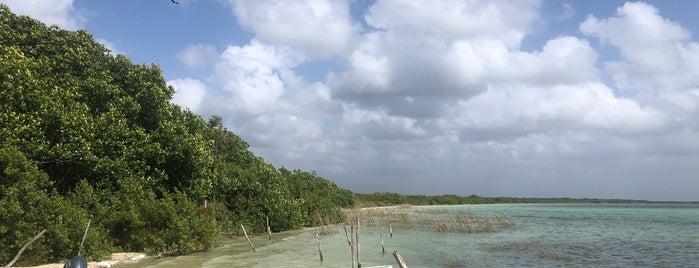 Laguna Kaan Luum is one of Lugares favoritos de Denis.