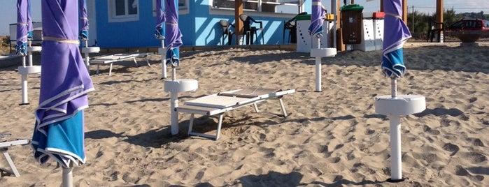 """""""ISLAMORADA - Dog Beach"""" is one of Locais curtidos por Riccardo."""