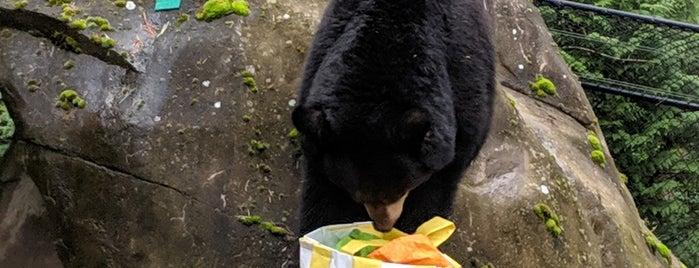 Black Bear Exhibit is one of Orte, die Jennifer gefallen.