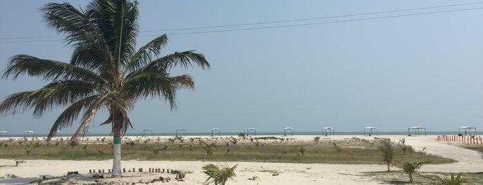 Playa Norte is one of Lugares favoritos de Fanny.