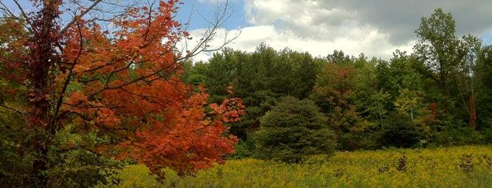 Blendon Woods - Sugarbush Trail is one of Tempat yang Disukai Tammy.