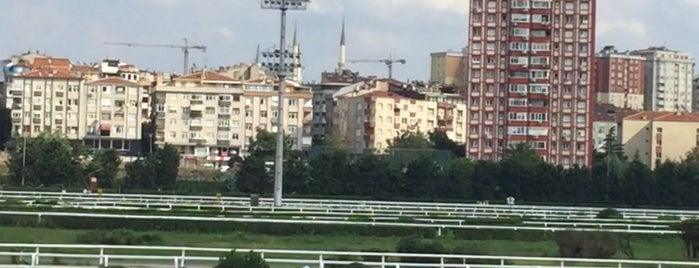 Türkiye Jokey Kulübü is one of Tempat yang Disukai Seda.