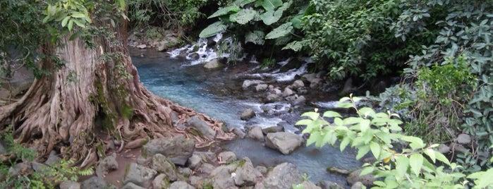 El bosque is one of Tempat yang Disukai Nanndo.