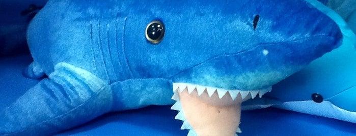 Sochi Discovery World Aquarium is one of Катеринаさんのお気に入りスポット.